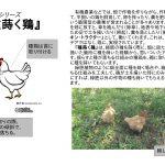 種蒔く鶏 落合修